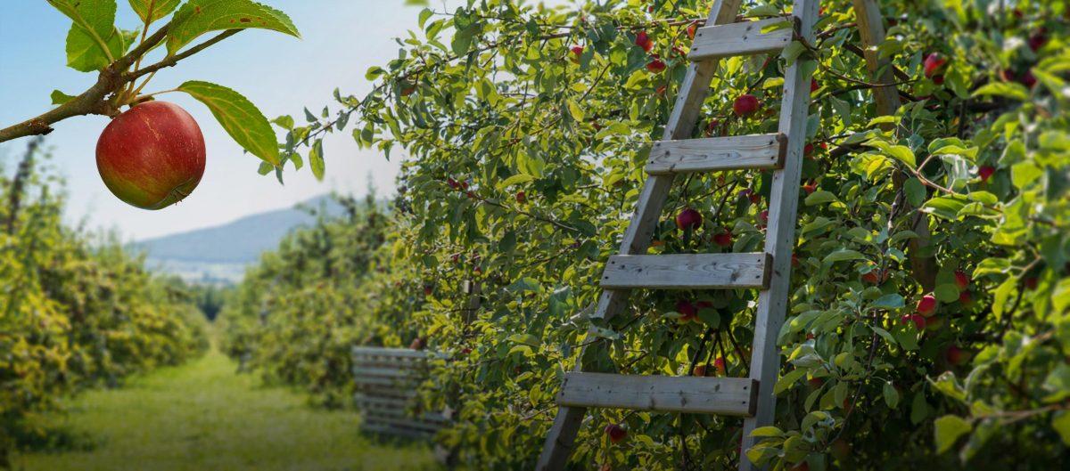 Est-ce qu'une pomme par jour éloigne le médecin pour toujours?